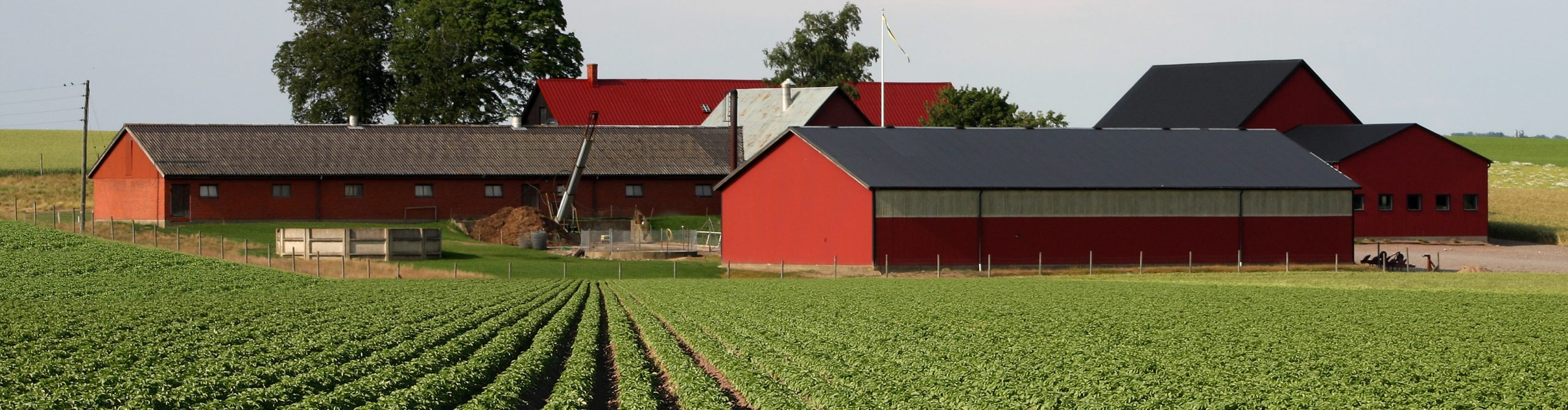 Farm with rows of crops